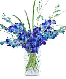Large True Blue Orchids