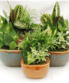 Earthenware Dish Garden