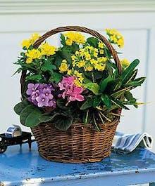 European-style garden basket