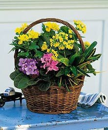 A delightful basket of live plants