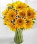 Endless Summer Sunflower
