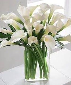 Simplicity Callas