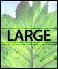 6'-7' Areca Palm